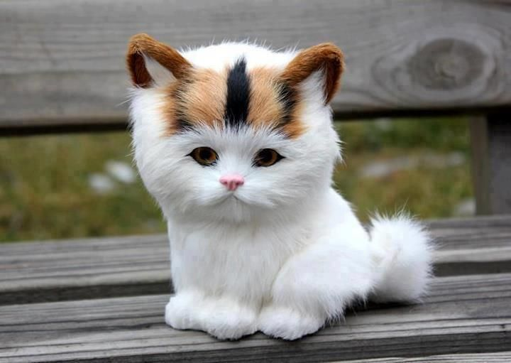 Adorable White Kitten Waiting For Mommy Image Follow The Pic For