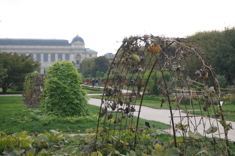 Paris bucolique 12 l automne au jardin des plantes for Au jardin paris