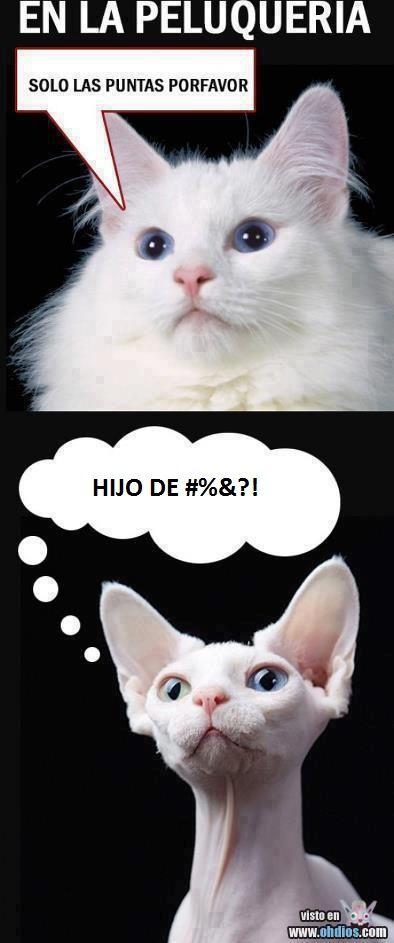 En La Peluqueria Memes Divertidos Chiste De Gatos Y