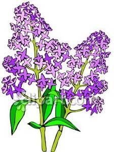 This Royalty Free Clip Art Illustration Of Quot Purple Lilac