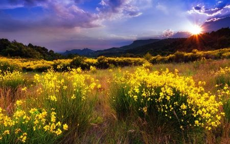 Mountain wildflowers at sunrise - Sunsets Wallpaper ID 1717743 - Desktop Nexus Nature