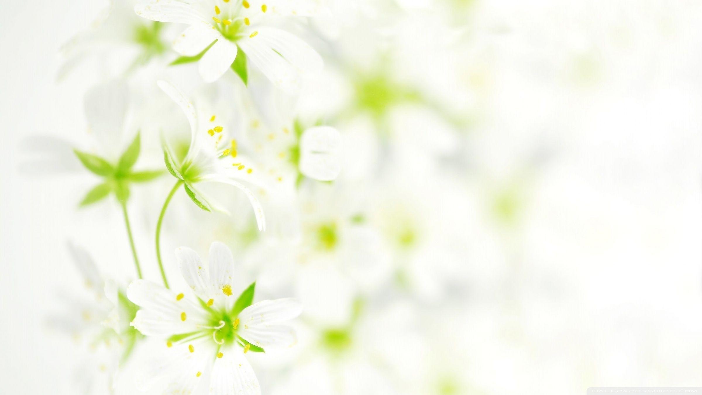 Best Ideas About White Flower Wallpaper On Pinterest Fl