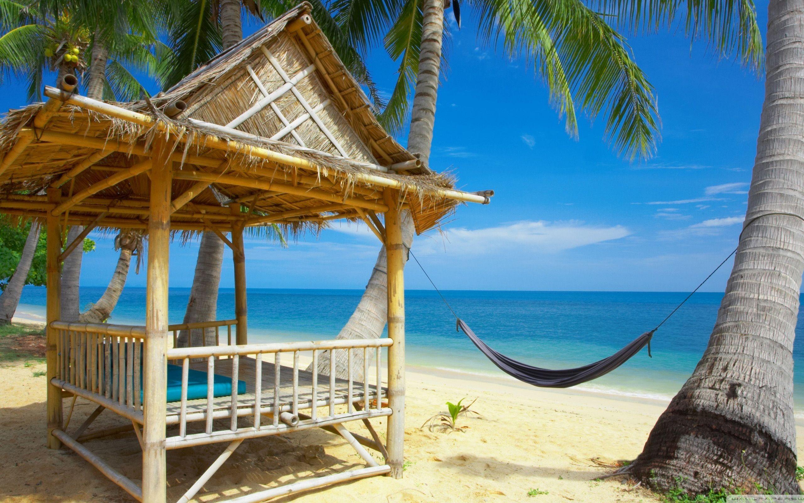 Palm Tree Beach Hammock At The Tropics Wallpaper (2560 1600)