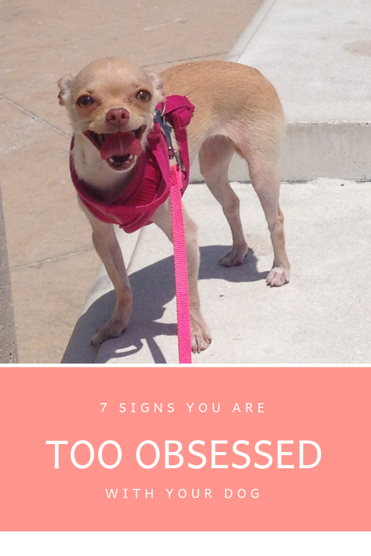 7 Signs You Are Too Obsessed With Your Dog Dog Quotes For The Dog