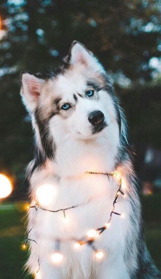 Such A Cute Pet Dog Can T Refuse Anyone Page 18 Of 51 Sciliy Cute Dog Wallpaper Cute Animals Animals