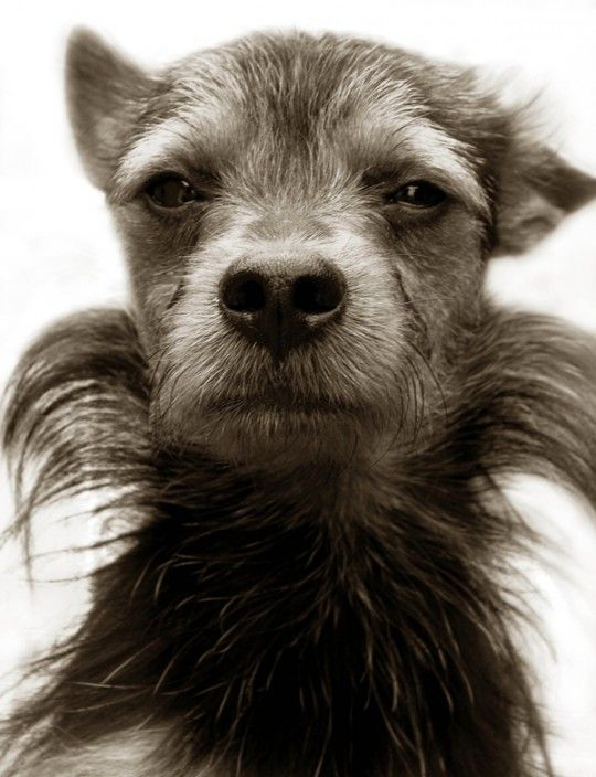 Portraits of dogs living in American shelters from Traer Scott.