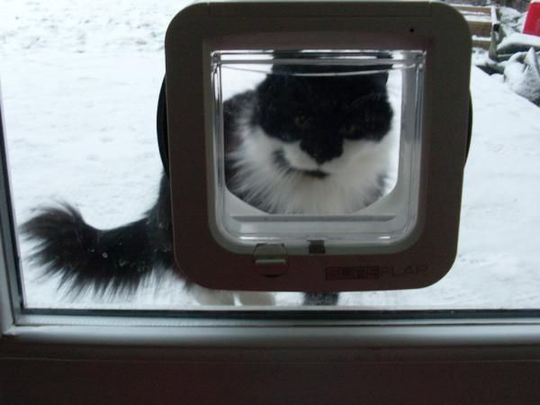 Mrs Bumble Coming Through Her Sureflap Microchip Cat Flap Out Of The Snow Http Www Sureflap Co Uk Pet Door Installation Cat Flap Pets