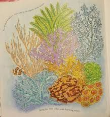 Explore Coloring Book Colouring And More Image Result For Animal Kingdom Millie Bee