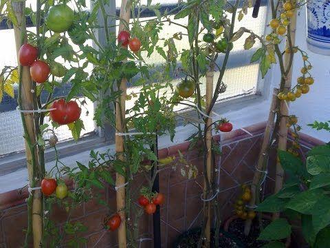 Como plantar cebollas en una botella de pl stico paso a paso y muy facil youtube el huerto - Como plantar arboles frutales ...