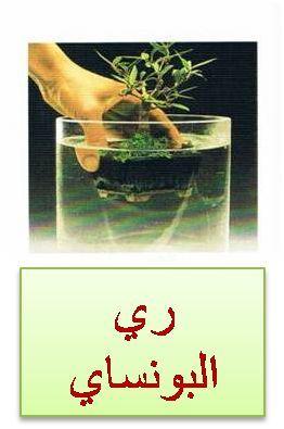 سقي اشجار البونساي Herbs