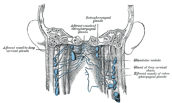 Diagram Lymph Nodes On Back Of Head Pioneer Deh P4400 Wiring 2 Neck Lymphatic Drainage Ed Pinterest System