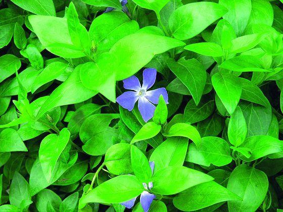 Kwiaty Do Cienia Plants