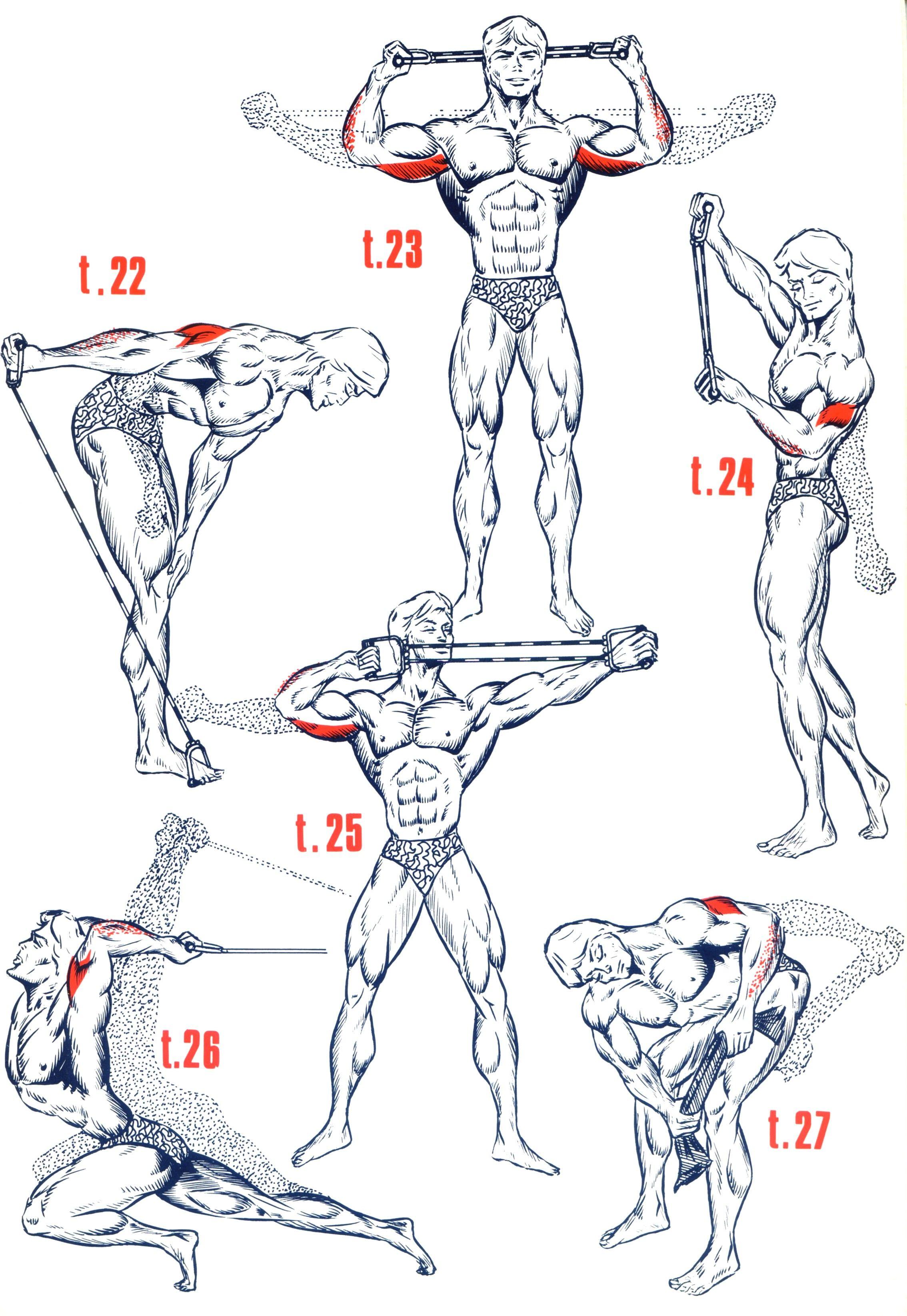 Triceps5 Biceps Workout b5a9ac7ac50