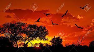 Resultado de imagen para imagenes paisajes con aves