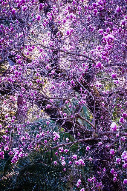 even her secrets had secrets | Baum, Blumen und Gärten