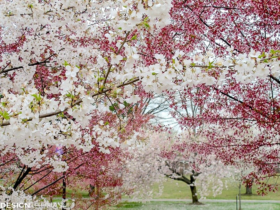 Cherry Blossom Decor How These Branches Inspire Spring Table Settings Cherry Blossom Decor Spring Table Settings Spring Table