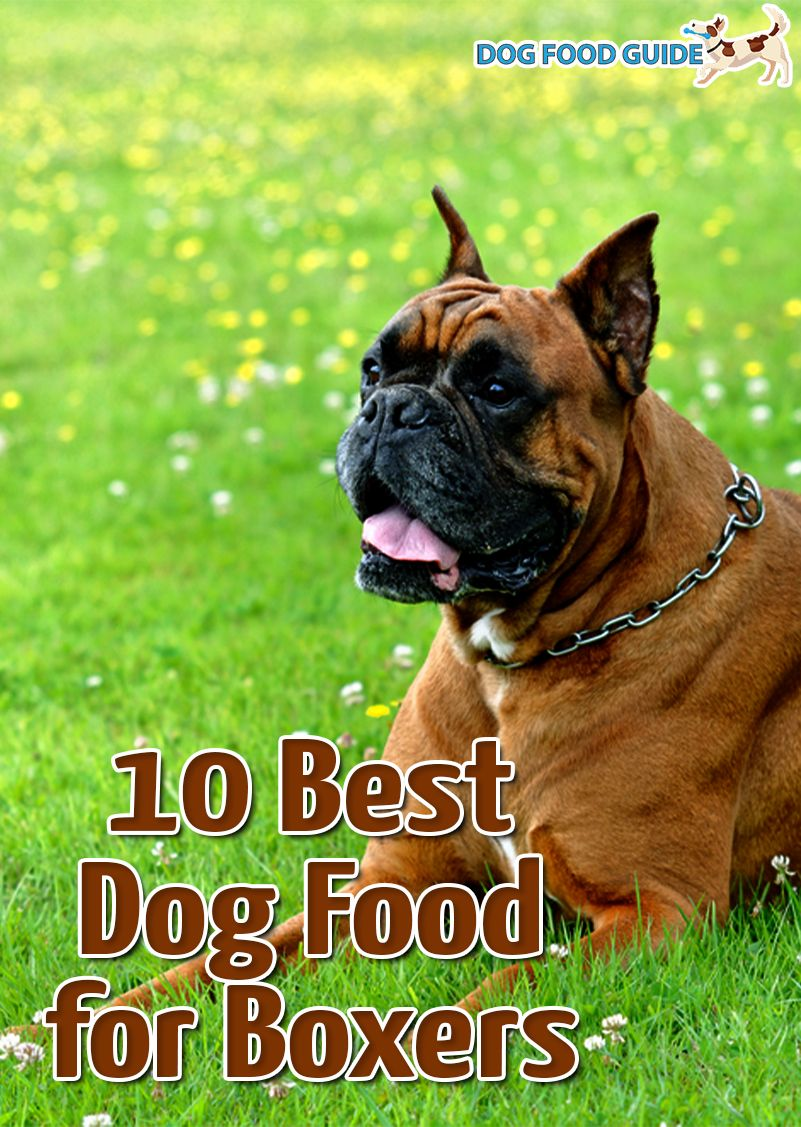Pin On Dog Food Guide