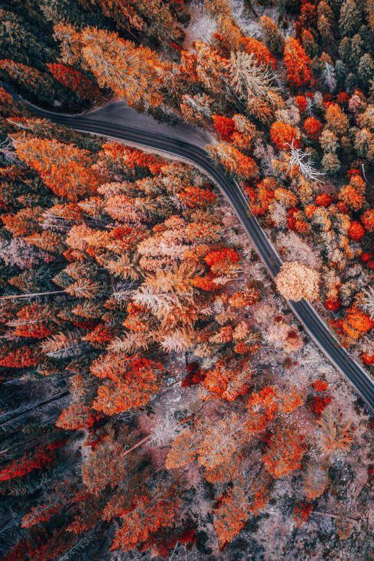 Pinterest ☓ Cmbenney Autumn Photography Autumn