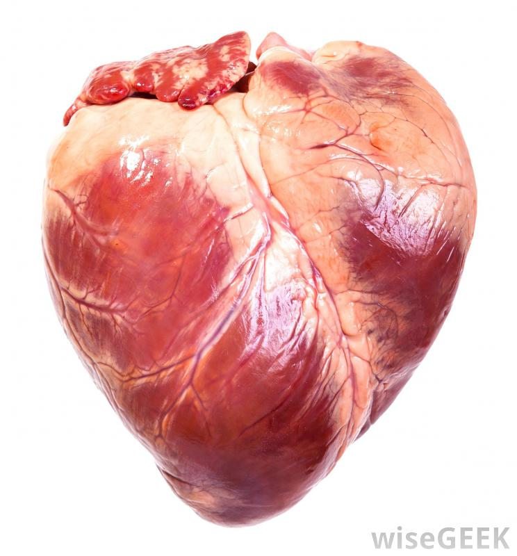 Muscle Structure Of The Heart Google Search Stock Photos White Background Human Heart