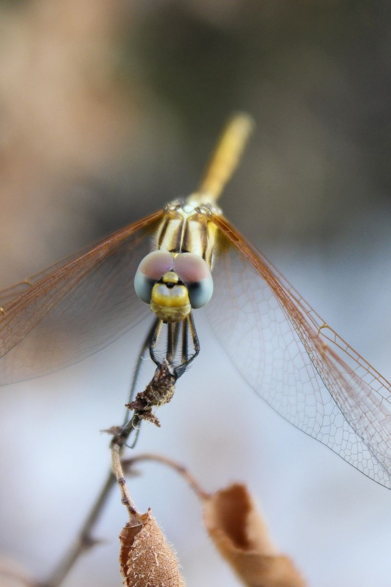 Free stock photo of insect, dragonfly