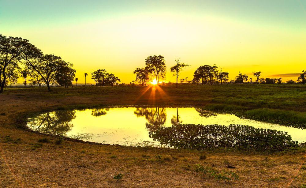 Com a ajuda do pôr-do-sol, o pantanal fica ainda mais bonito.