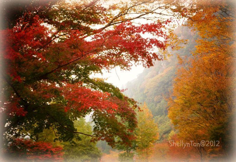 One of the my favorite Autumn shot I got this November..Oita Japan