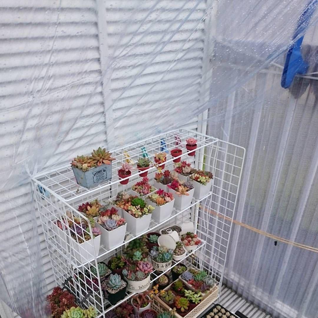 簡易的に雨避けを設置 100均のテーブルクロスを棚と物干し竿に洗濯
