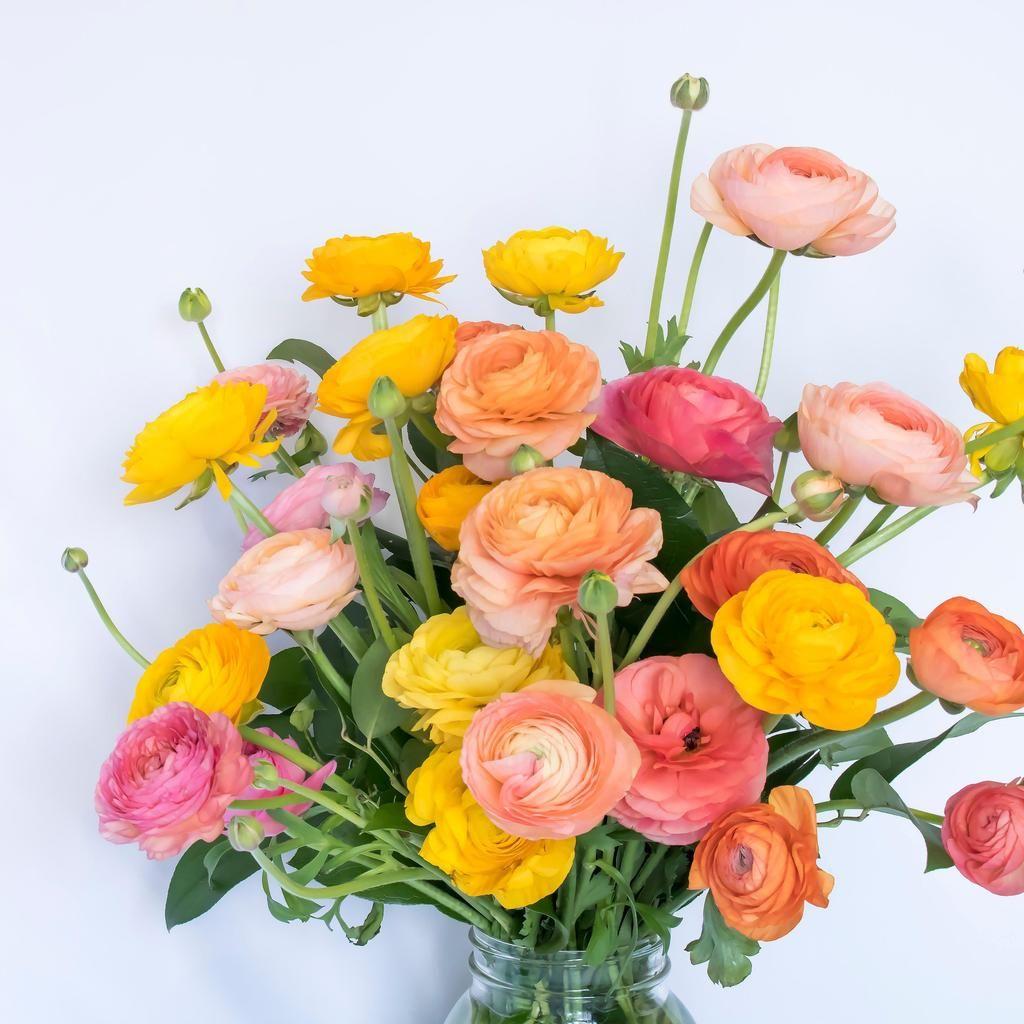 Allium Ampeloprasum Buttercup Flower Easy To Grow Bulbs Rainbow Flowers