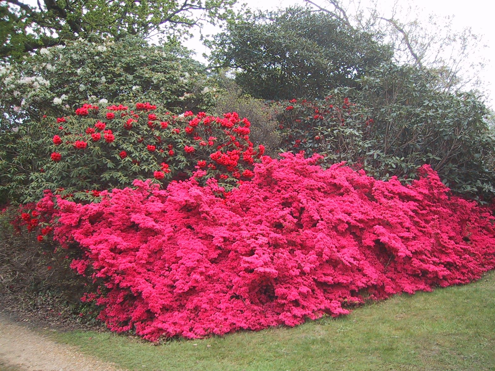 Azaleas Exbury Garden Hampshire UK Picnic planning