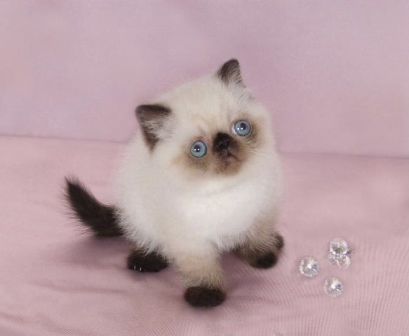 Pin On Beautiful And Funny Cats