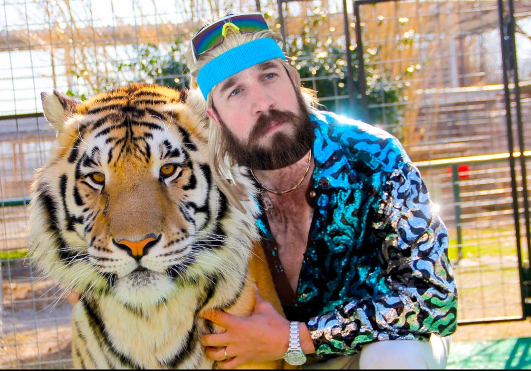 Tiger King Meme in 2020 Best documentaries, Big cat