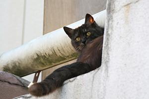 Title:cat 4  $22.00  #cat