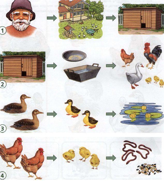 картинки домашних животных и птиц для малышей убрать эффект