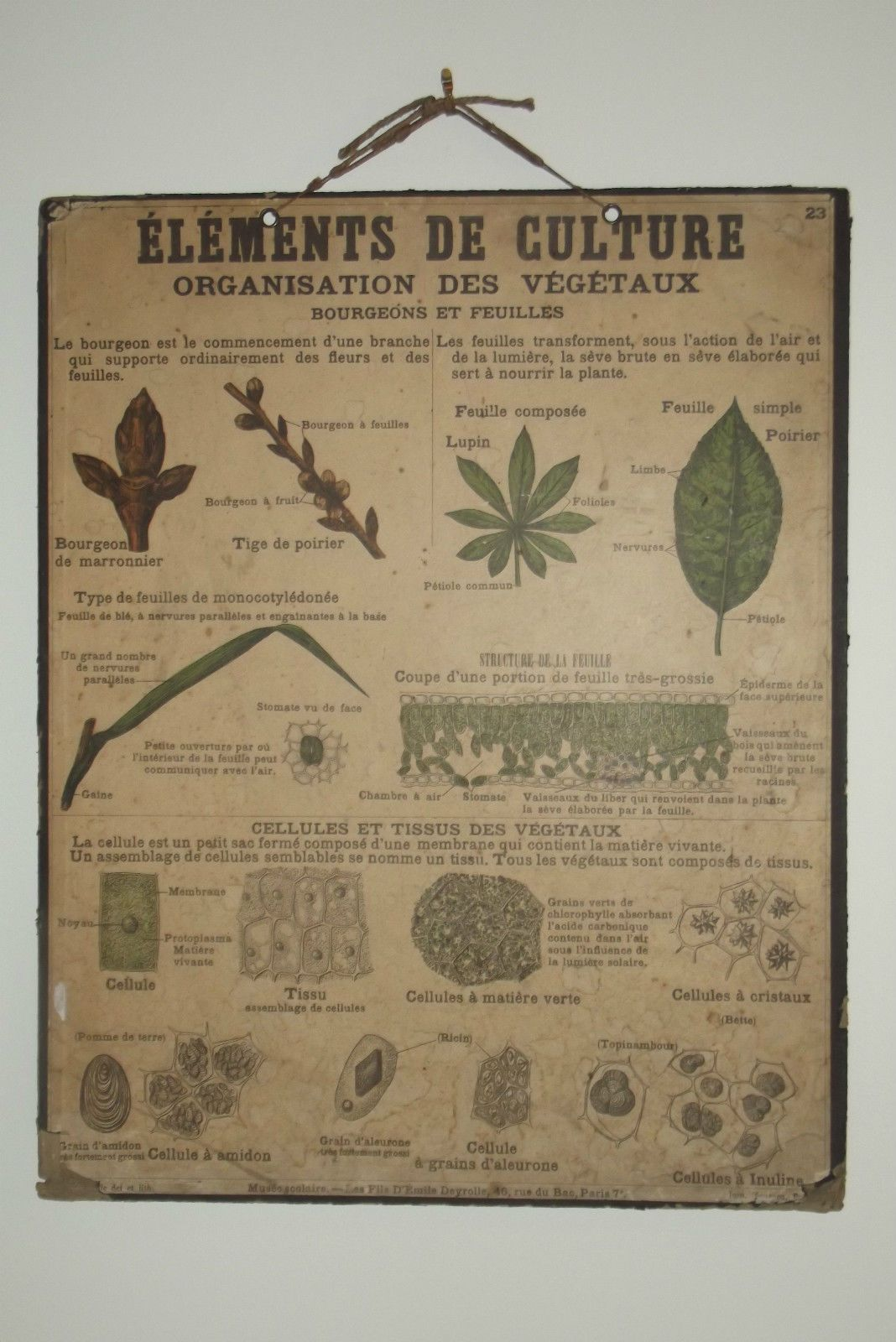 Ancienne affiche scolaire deyrolle planche ecole n 23 sciences naturelles - Carte murale scolaire ancienne ...