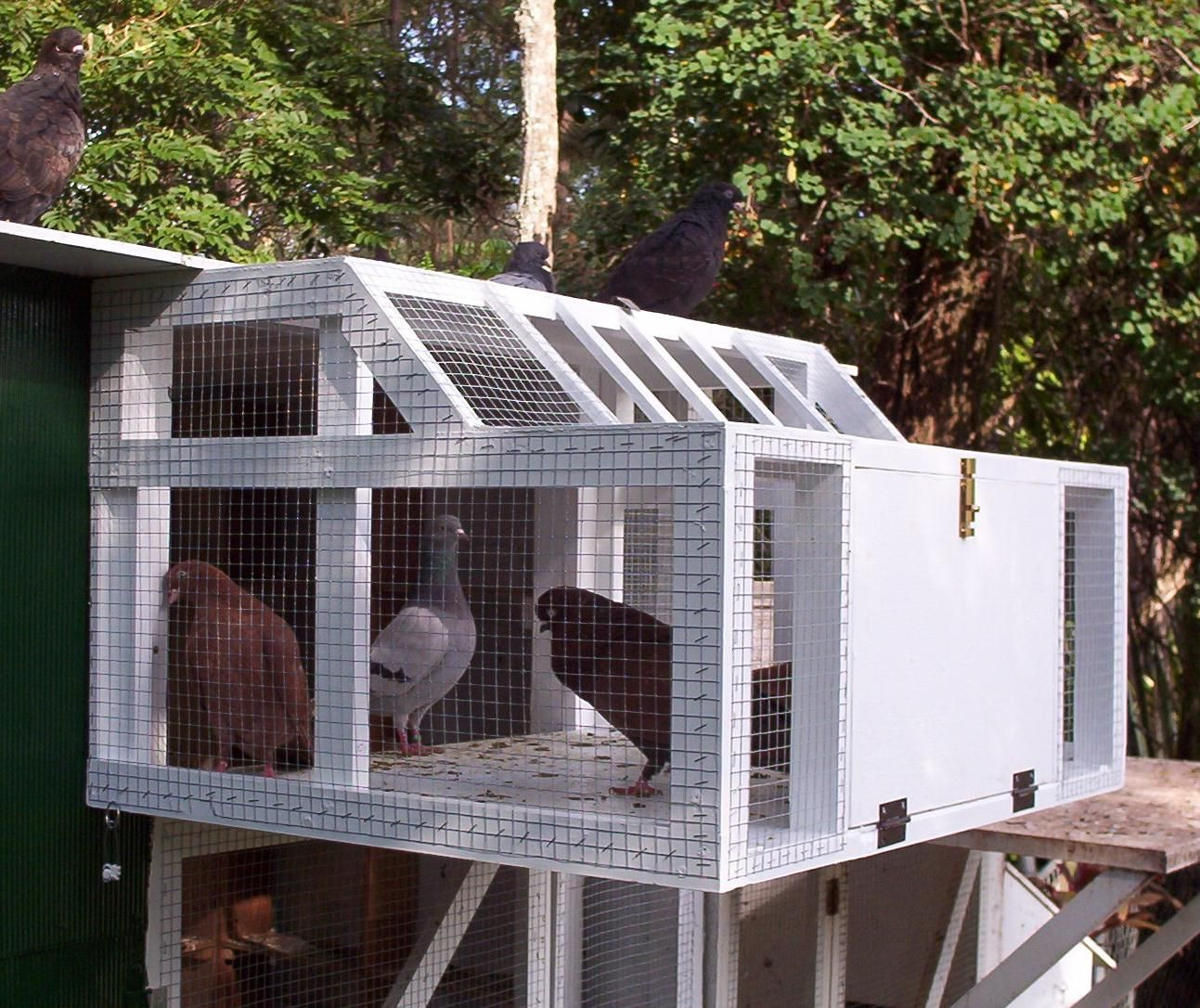 Stall Trap Bay From 175 00: How To Make Pigeon Cage