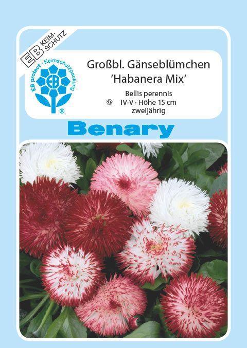 Benary Ganseblumchen Habanera Mix Zweijahrig Ganseblumchen Zweijahrige Saatgut
