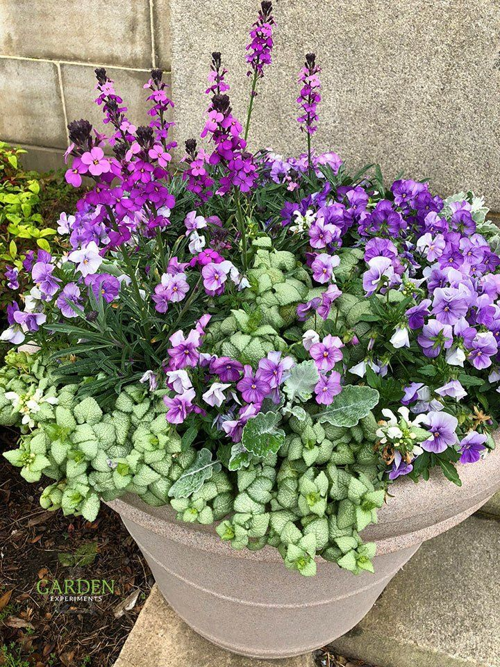 and White Container Garden Purple and white container gardenPurple and white container garden