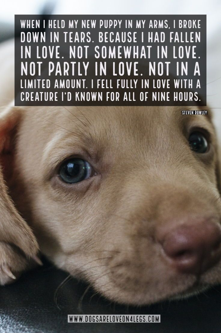 Dog Quote - When I held my new puppy in my arms... Dog ...