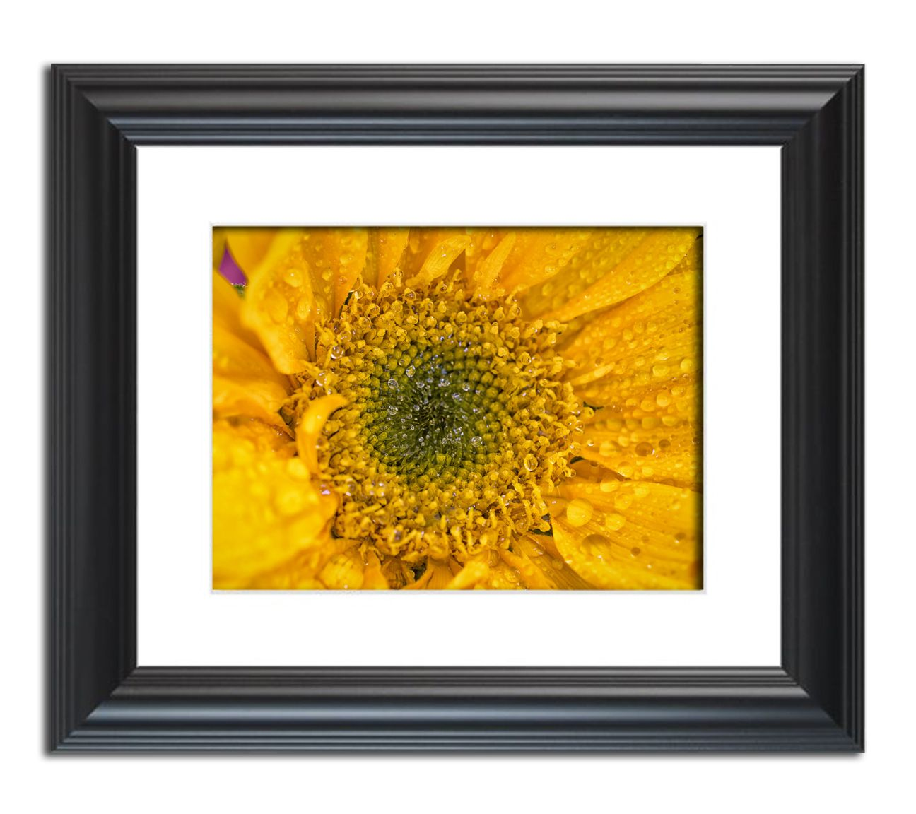 Joyful Color, Framed Nature photo Wall Art Print by nature ...