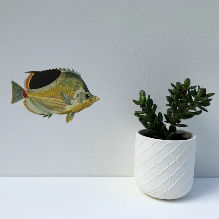 decorations fish marine wallmount life decor walls mount com wall for buyamag decoration sea ocean office