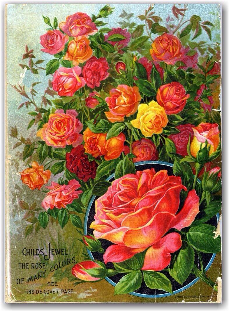 Vintage seed company catalog illustrations
