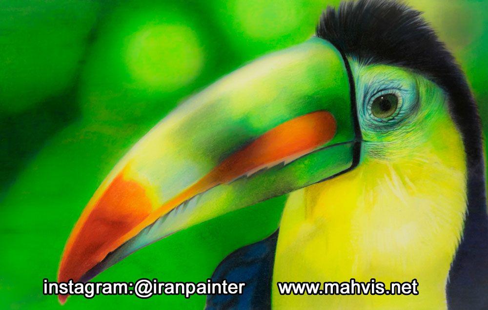 طراحی پرندگان با مداد رنگی