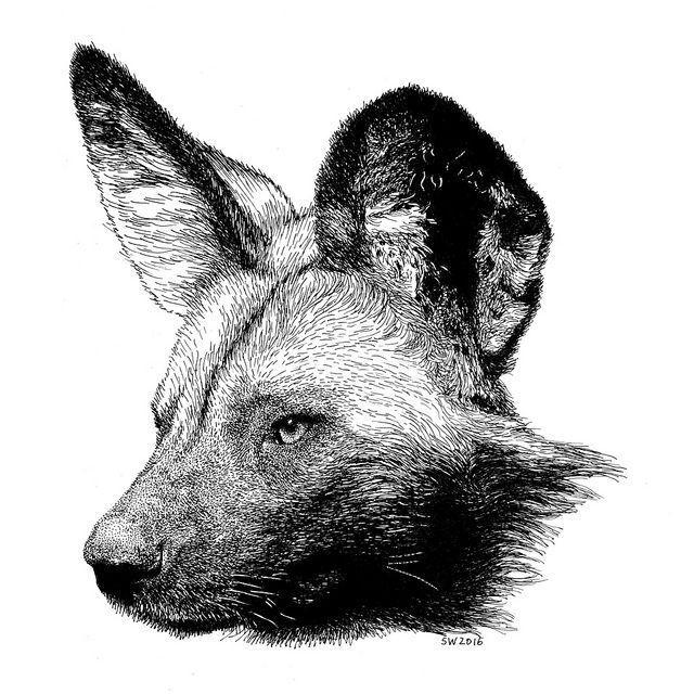 It's just a picture of Shocking African Wild Dog Drawing