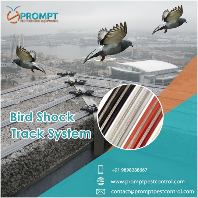 Bird Shock Track System   Bird Shock Track System   Birds