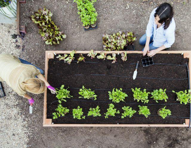Weekend DIY How to Build a Raised Bed Jardineras y Jardines - como hacer una jardinera