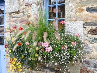 Jardini res avec peu d 39 arrosage jardin pinterest for Composition jardiniere exterieure