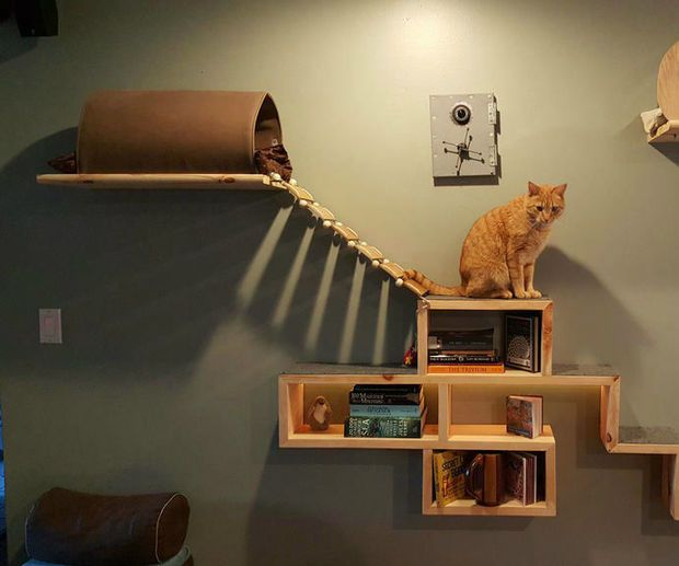 Cat Adventure And Escape Wall Diy Cat Tree Cat Playground Cat Wall