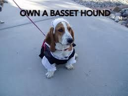 Ain't nothin but a hound dog