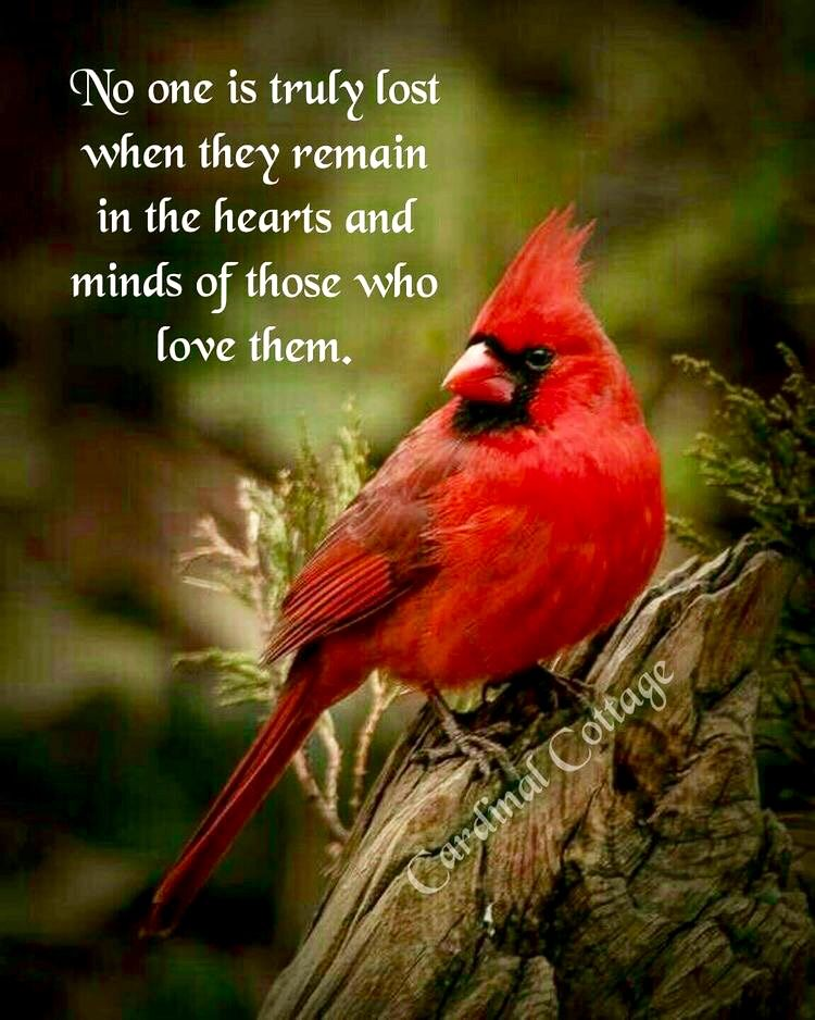 No one is truly lost... cardinals Bird quotes, Grief
