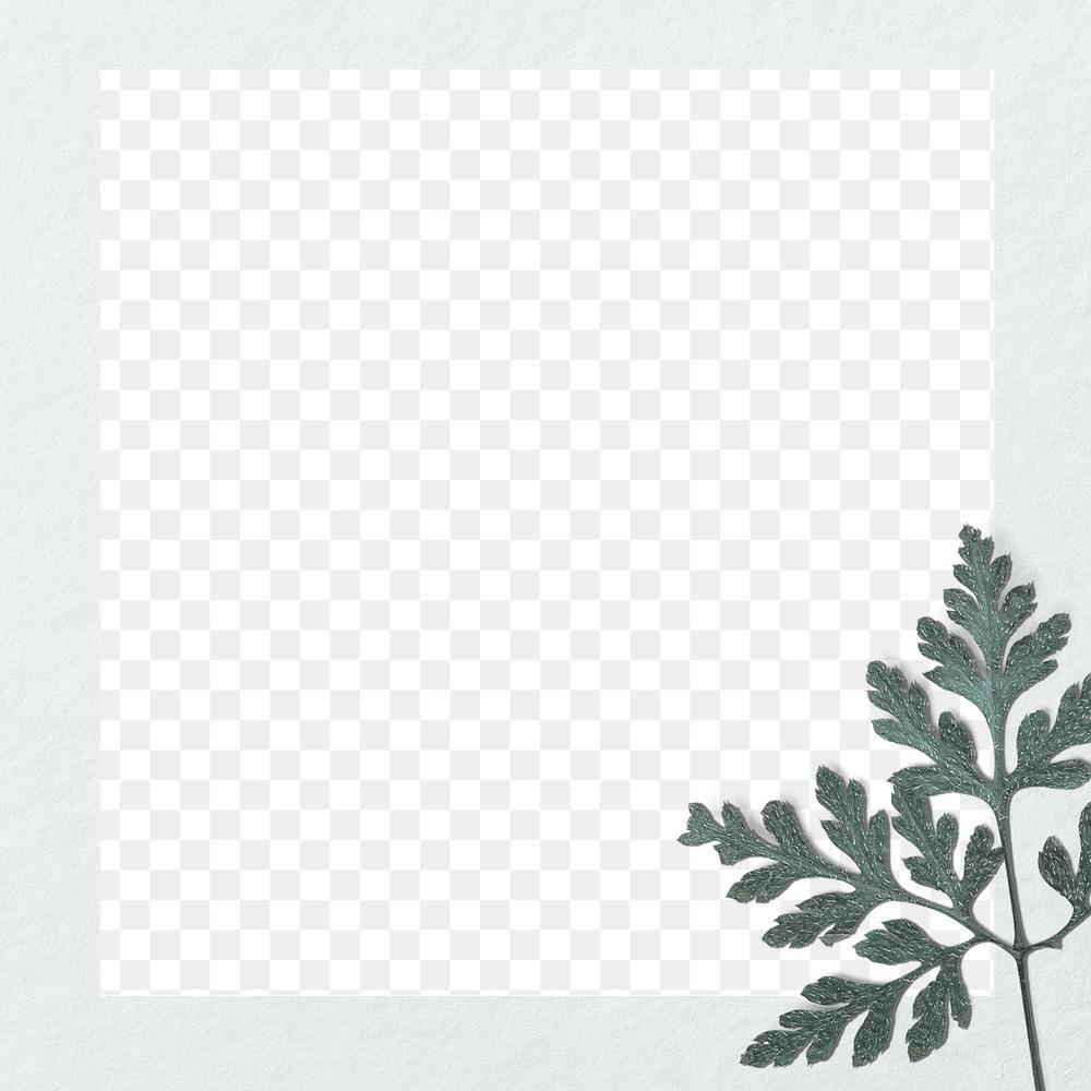Fern Leaf Frame Png Transparent Background Free Image By Rawpixel Com Nunny Christmas Card Images Transparent Background Frame